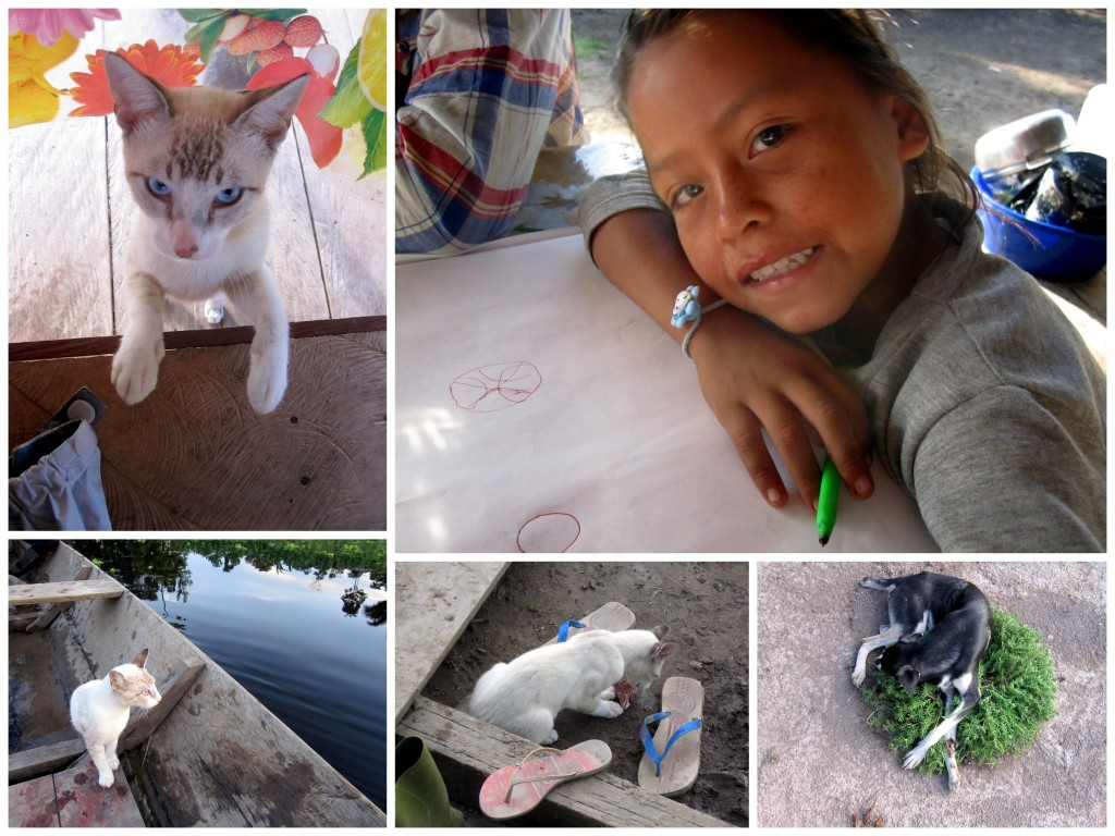 Poncholin the bravest cat ever with her stolen chicken head, the loyal dogs, and the owner's daughter.