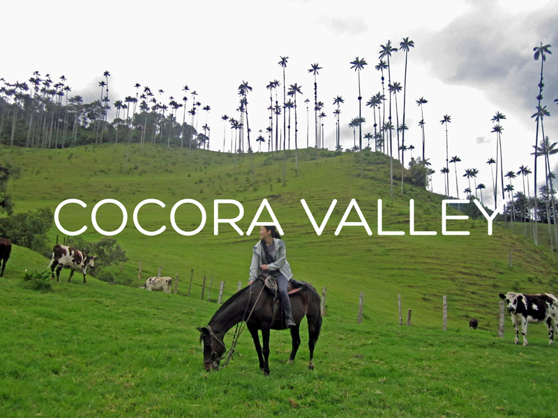 cocora-feature